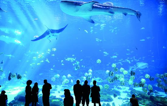 O Vidroplano: os segredos do vidro em aquários, piscinas e pisos